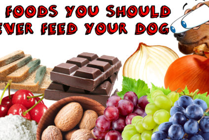 10 Foods That Are Dangerous For Dogs