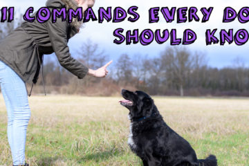 11 Commands Every Dog Should Know