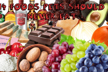 14 Foods Pets Should Never Eat