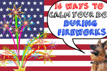 16 Ways To Calm Your Dog During Fireworks