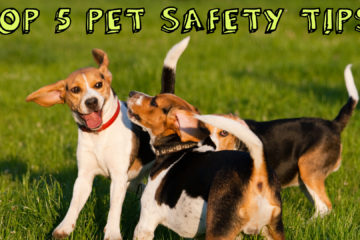 Top 5 Pet Safety Tips