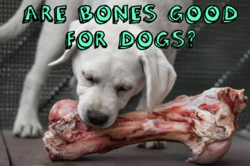 Are Bones Good For Dogs?