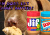 Can Dogs Eat Peanut Butter?