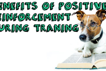 Benefits Of Positive Reinforcements During Training