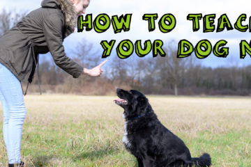 How To Teach Your Dog No