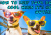 How to keep your dog cool when it's hot outside