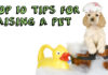 Top 10 Tips For Raising A Pet
