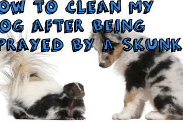 Hоw Tо Gеt Rіd Of Skunk Smеll Out Of Your Pet