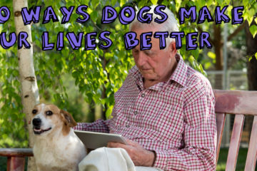 20 ways dogs make our lives better