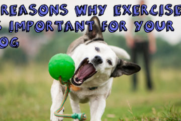 5 Reasons Why Exercise Is Important For Your Dog