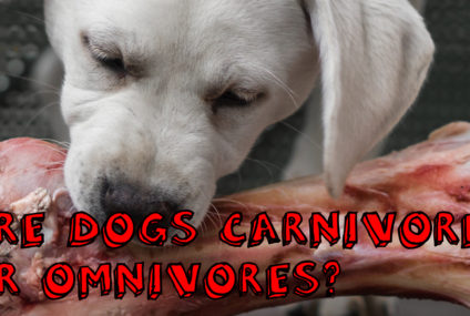 Are Dogs Carnivores or Omnivores?