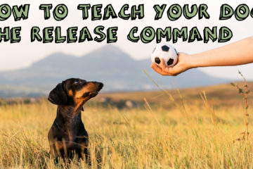 How to teach your dog the release command