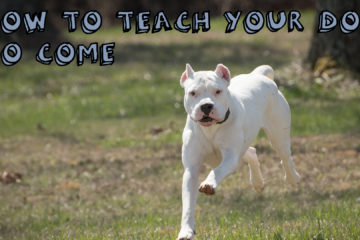 How to teach your dog to come on command