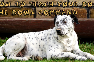 How to teach your dog down