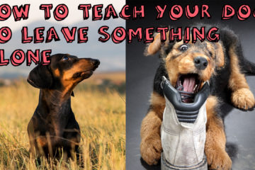 How to teach your dog to leave something alone