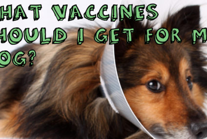 What vaccines should I get for my dog?