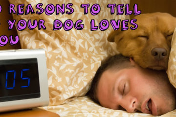 10 Reasons To Tell If Your Dog Loves You