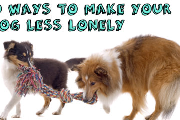 10 Ways To Make Your Dog Less Lonely