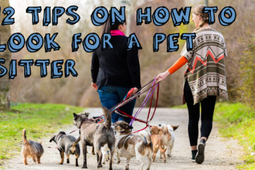 Top 12 Tips On How To Find A Pet Sitter