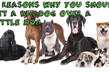 14 Reasons Big Dogs Are Better Than Little Dogs