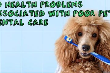 20 Health Problems Associated With Poor Pet Dental Care