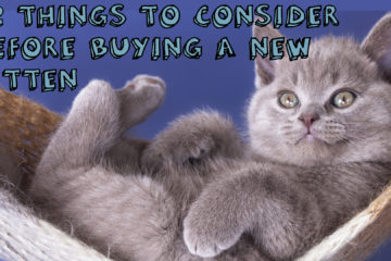 22 Things To Consider Before Buying A New Kitten