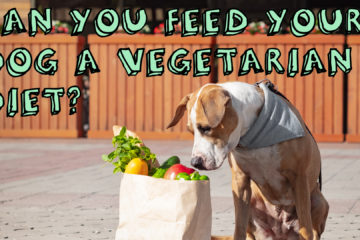 Can I Feed My Dog a Vegetarian Diet?