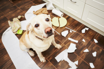 Discover How To Stop Bad Dog Behavior And Unlock Their Natural Intelligence