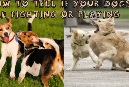 How To Tell If My Dogs Are Fighting Or Playing