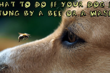 What To Do If Dog Gets Stung By Bee Or Wasp?