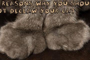 10 Reasons Why You Shouldn't Declaw Your Cats