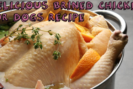 Delicious Brined Chicken For Dogs Recipe