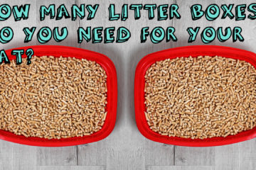 How Many Litter Boxes Do You Need For Your Cat?