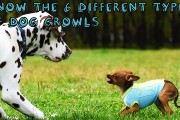 Know The 6 Different Types Of Dog Growls
