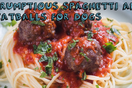 Scrumptious Spaghetti and Meatballs For Dogs