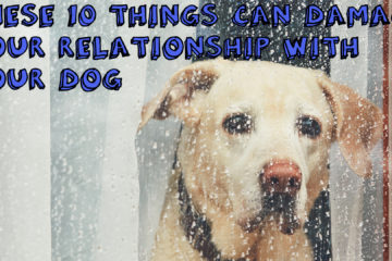 These 10 Things Can Damage Your Relationship With Your Dog