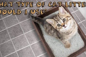 What Type Of Cat Litter Should I Use?