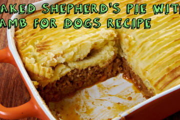 Baked Shepherd's Pie with Lamb for Dogs Recipe