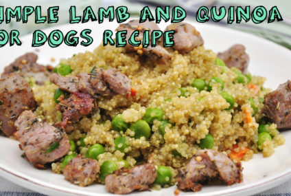 Simple Lamb and Quinoa for Dogs Recipe