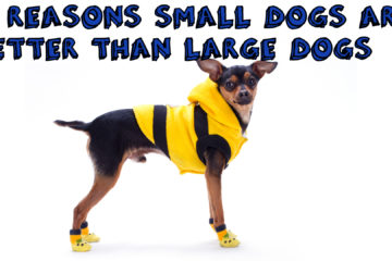 14 Reasons Small Dogs Are Better Than Large Dogs