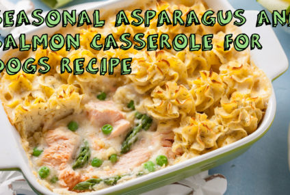 Seasonal Asparagus and Salmon Casserole for Dogs Recipe