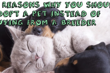 Why You Should Adopt a Pet Rather Than Buy