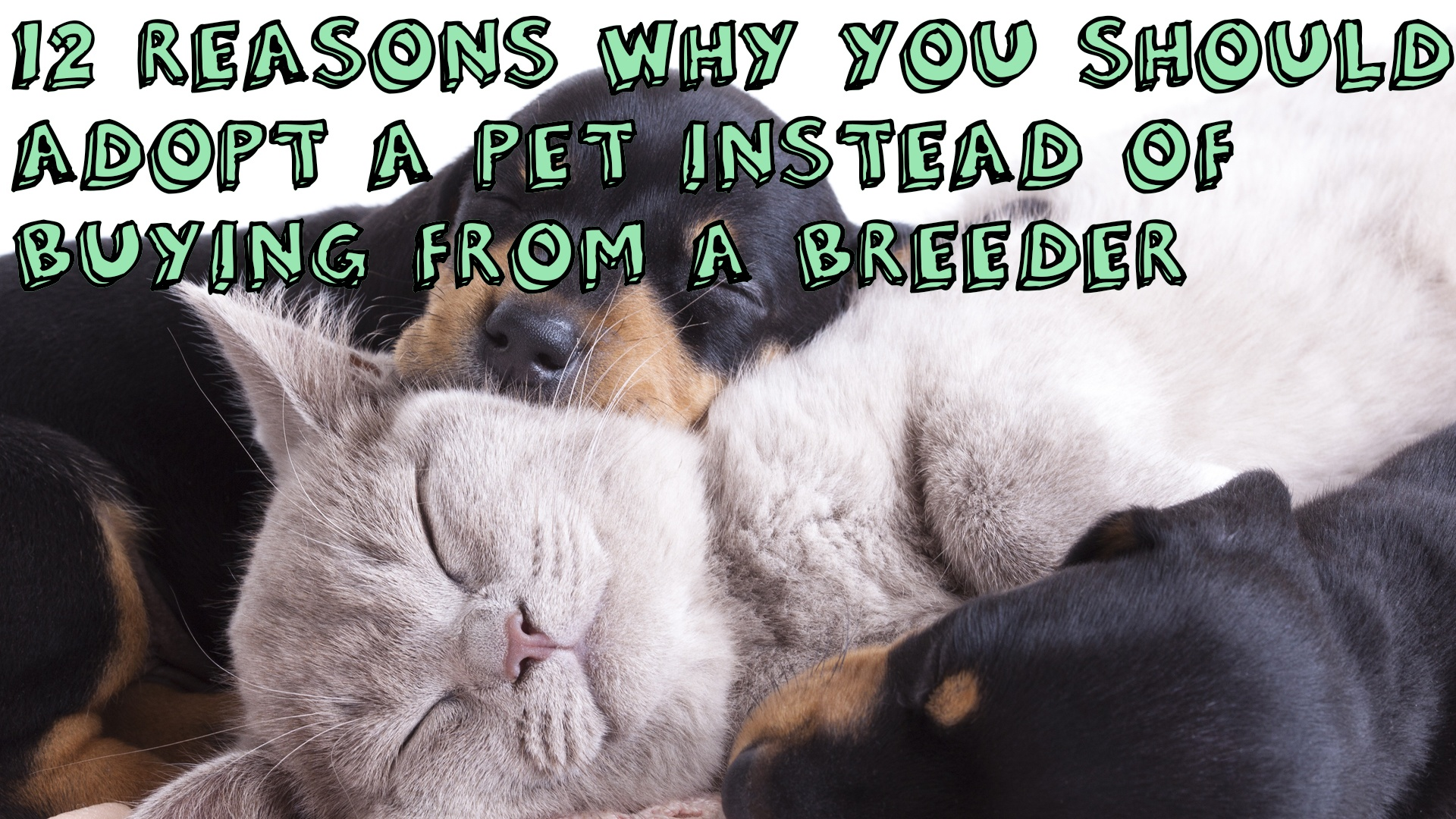 12 Reasons Why You Should Adopt A Pet Instead Of Buying From A Breeder