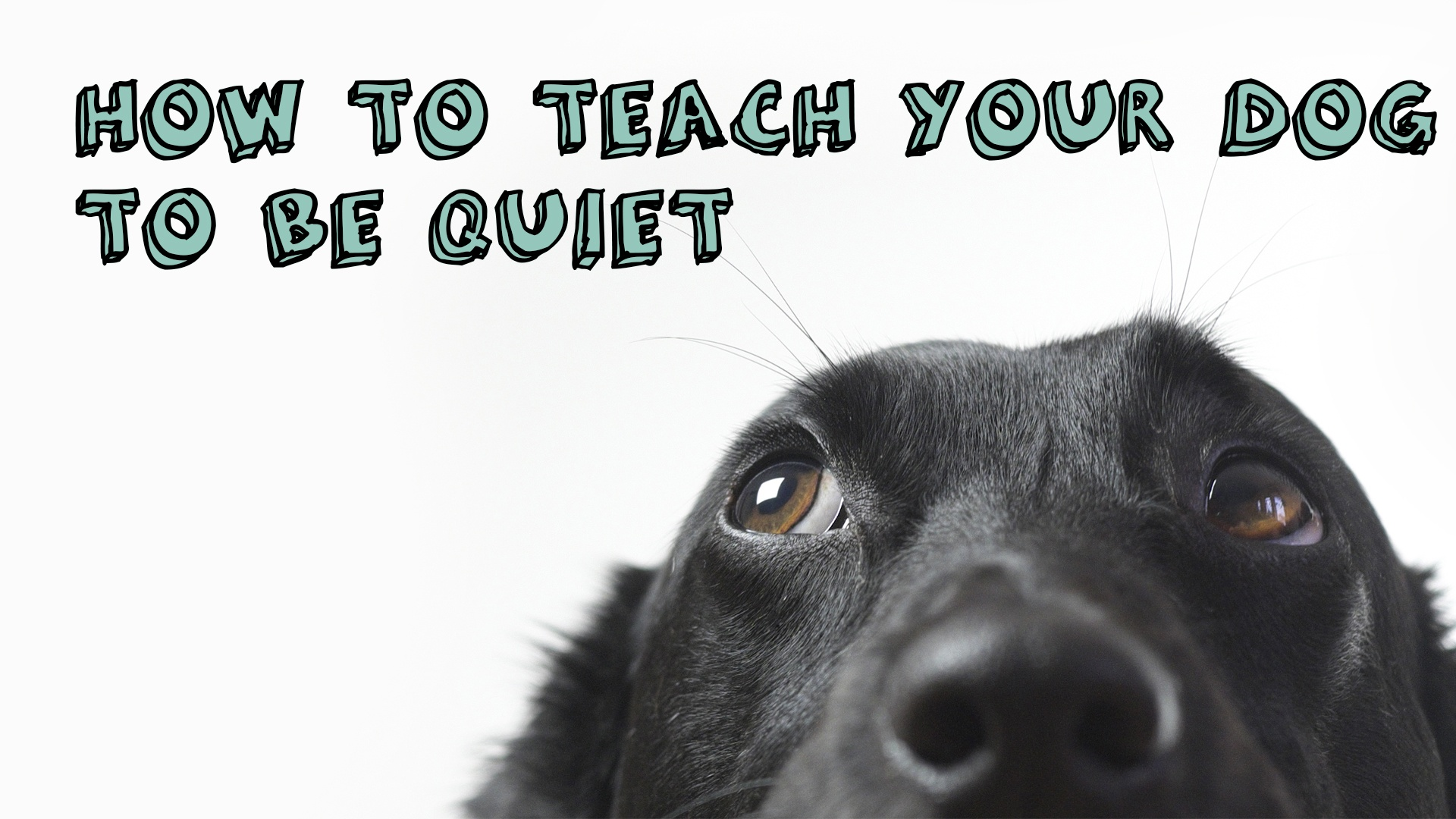How to teach your dog to be quiet
