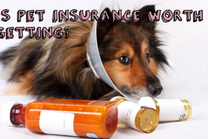 Pet Insurance: Is It Worth Getting?