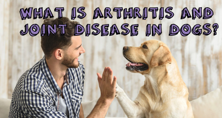 What is Arthritis and Joint Disease in Dogs?