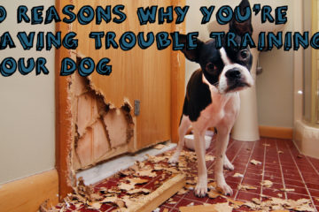 10 Reasons Why You're Having Trouble Training Your Dog