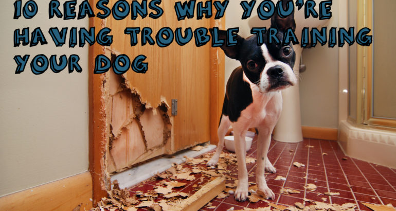 10 Reasons Why Youre Having Trouble Training Your Dog