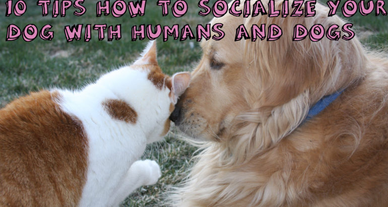 10 Tips How to Socialize Your Dog With Humans And Dogs