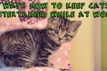 10 Ways How to Keep Cats Entertained While at Work